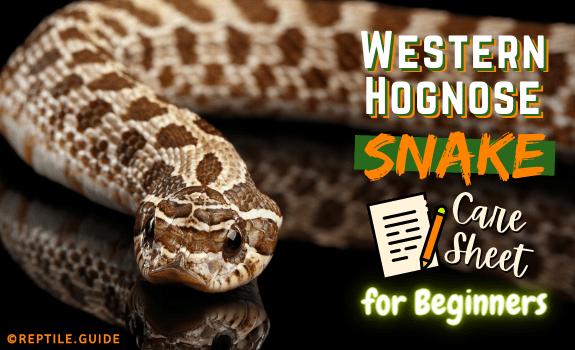 Western Hognose Snake Image