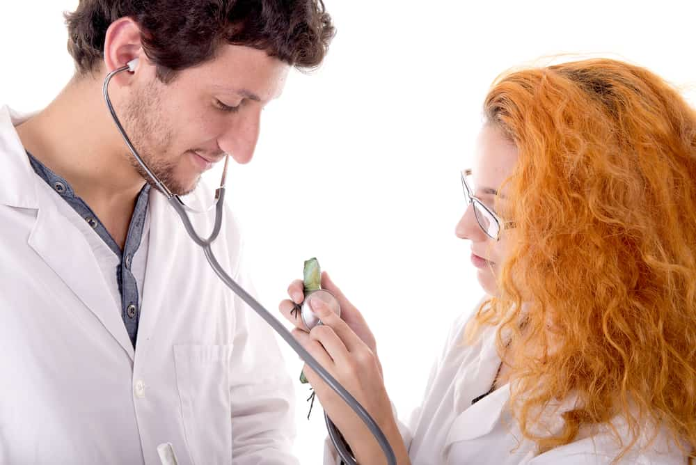 veterinarians with small anole