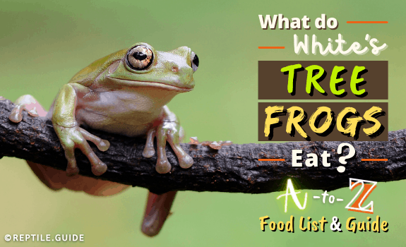 What do White's Tree Frogs Eat A-Z Food List and Guide