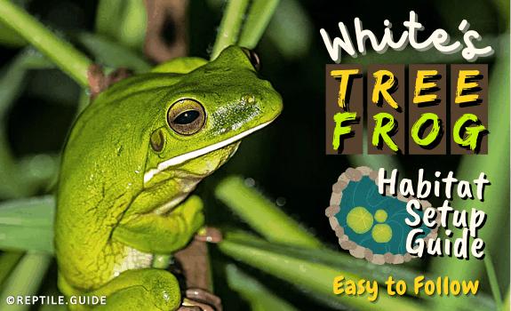 White's Tree Frog Habitat Setup Guide (Easy to Follow) (1)