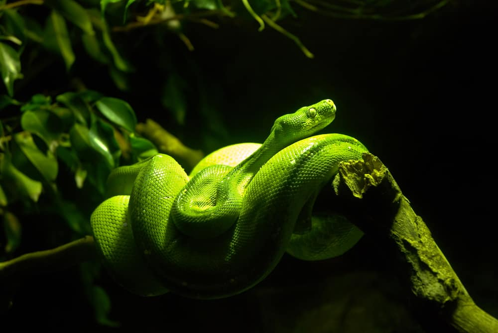 Age of captive and pet snakes