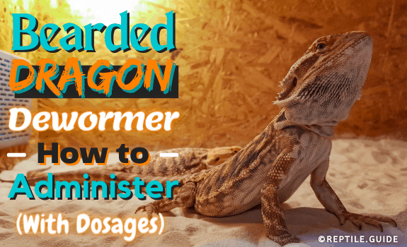 Bearded Dragon Dewormer How to Administer (With Dosages)