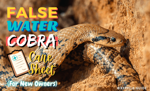 false water cobra