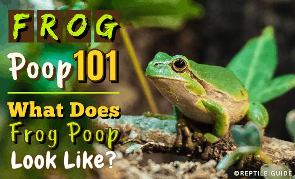 Frog Poop 101 What Does Frog Poop Look Like