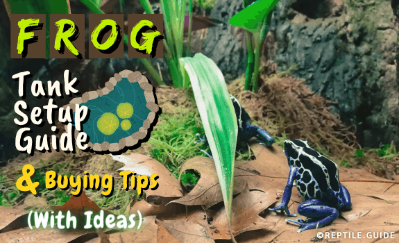 Frog Tank Setup Guide & Buying Tips (With Ideas) (1)
