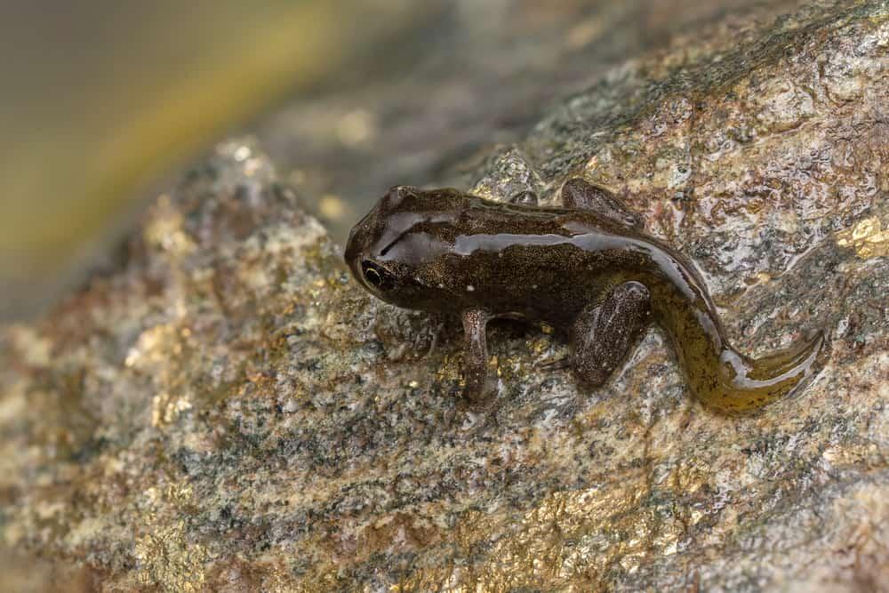 Tadpole metamorphosis to frog