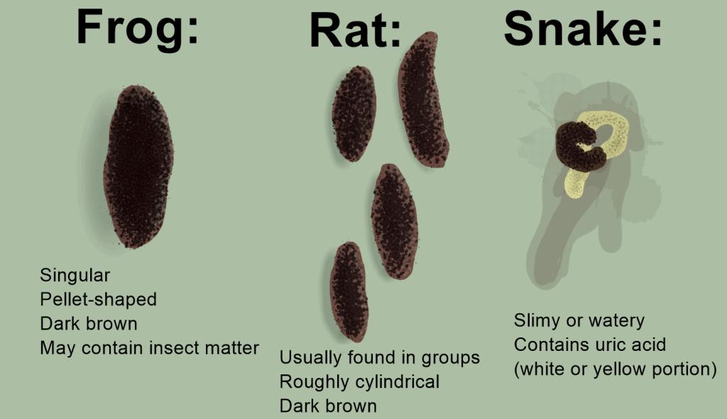 frog poop illustration