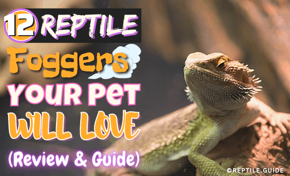 12 Reptile Foggers Your Pet Will LOVE (Review & Guide)