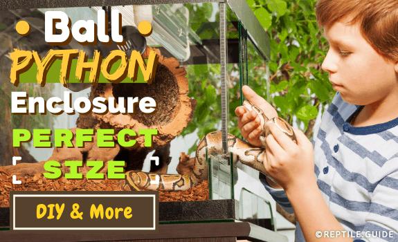 Ball Python Enclosure Perfect Size, DIY & More