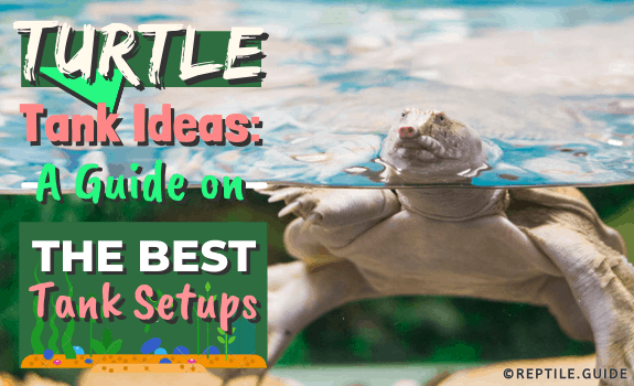 Turtle Tank Ideas A Guide on the Best Tank Setups