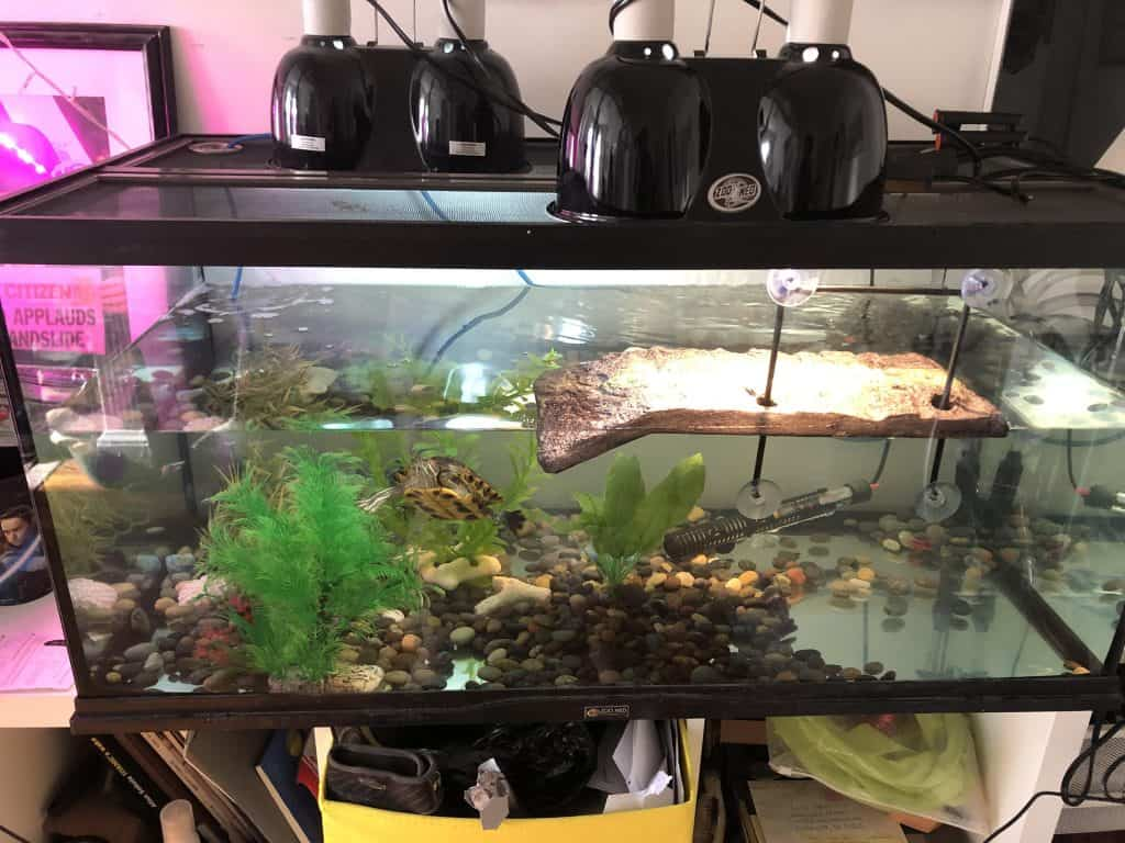 basic aquatic or semi aquatic tank setup