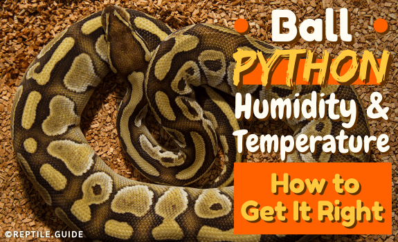 Ball Python Humidity & Temperature How to Get It Right