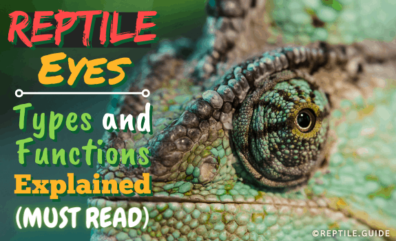 Reptile Eyes Types and Functions Explained (Must Read)