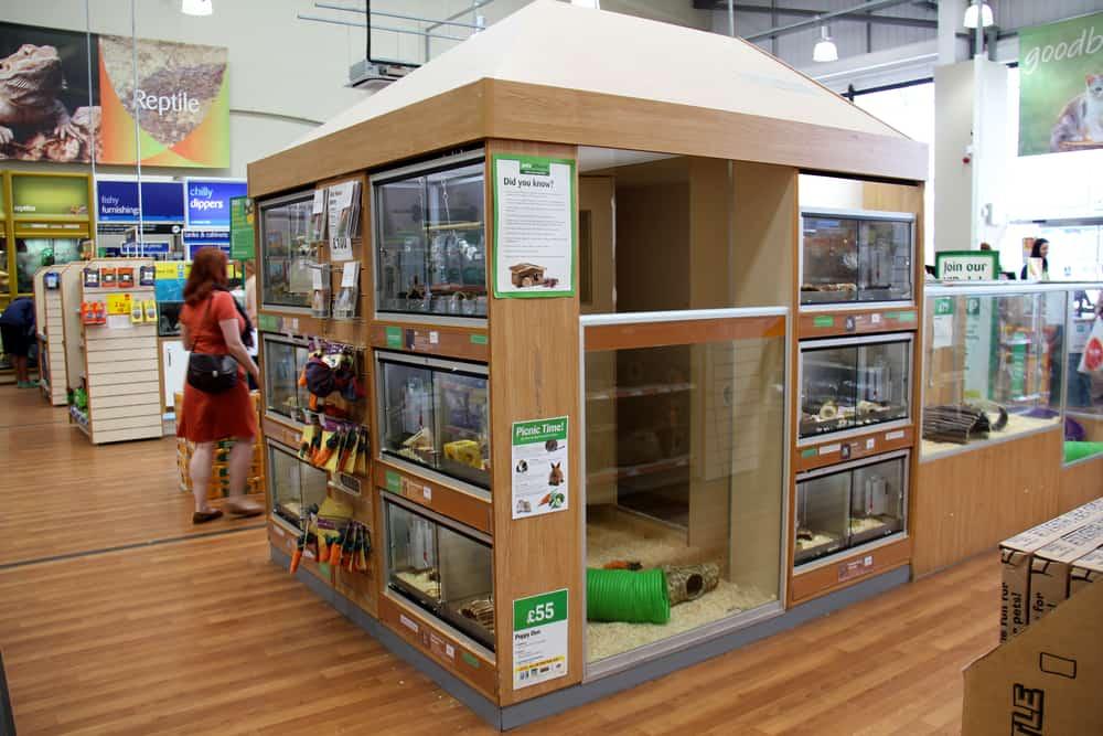 pet stores sell the enchi ball python morph