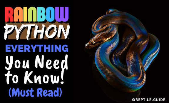 Rainbow Python Everything You Need to Know! (Must Read)